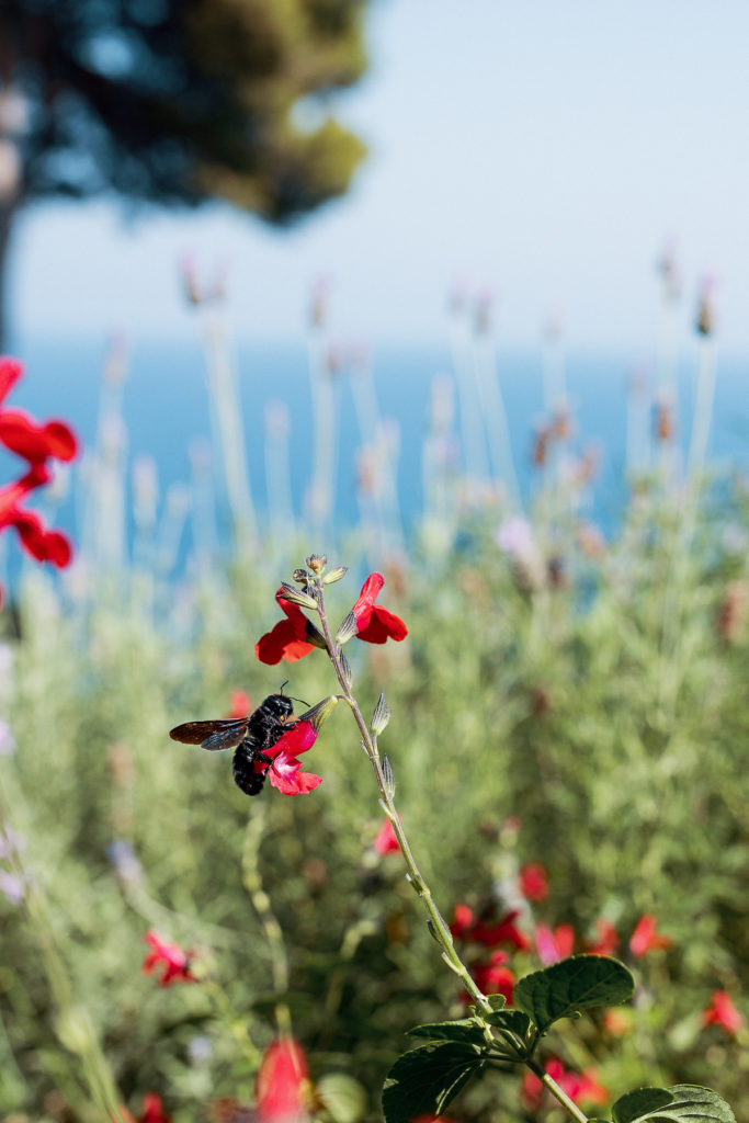 bee on flower in front of coastline in Blanes, Spain, pre ceremony wedding