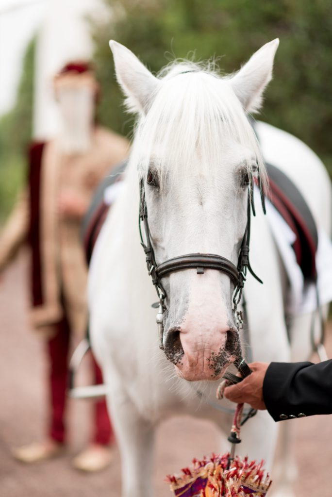 white horse with reigns
